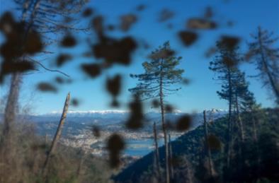 眼前有飞蚊就会视网膜脱落吗?