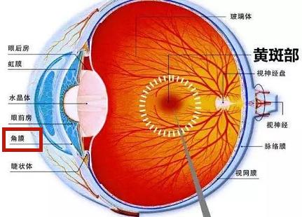 眼睛黄斑区